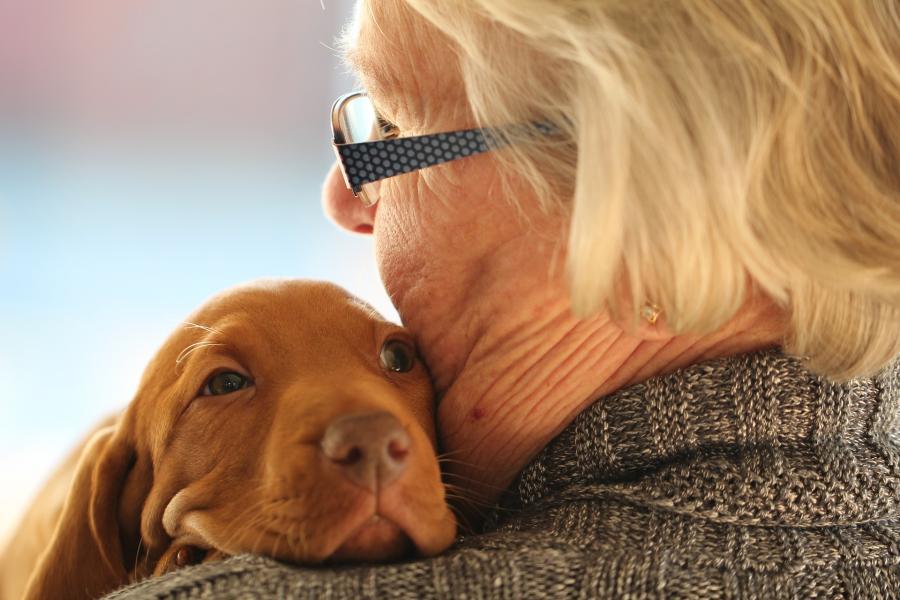 Пять пород собак, которые подойдут для пожилых людей