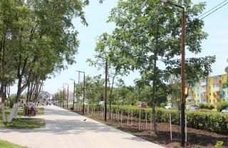 Фото: Администрация ГО Большой Камень | В Приморье появился рябиновый бульвар