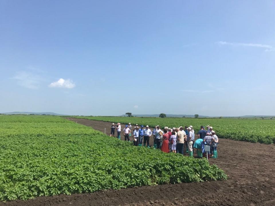 Перспективы развития картофелеводства в Приморье обсудили участники научно-практического семинара