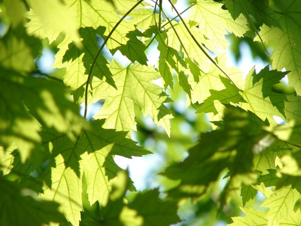 «Иди сюда, заткнись»: видео, снятое на дереве в Приморье, набирает популярность в Сети