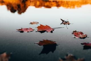 Фото: pexels.com | «Придет надолго». Синоптики сказали, что будет осенью в РФ после аномального лета