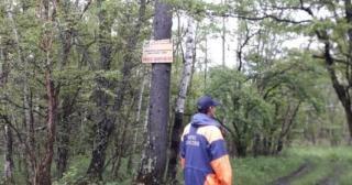 Фото: пресс-служба ДВРПСО МЧС России   Приморцам рассказали, что делать, если не получается выбраться из леса
