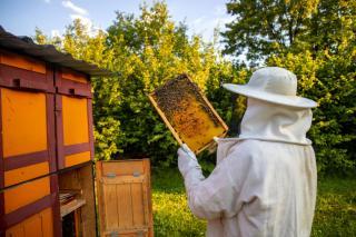 Фото: freepik.com | «Пчеловодство – это любовь». Праздник первого меда пройдет в Приморье