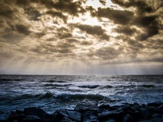 Фото: pixabay.com | Такого еще не видели: огромный морской «зверь» вышел к людям на пляже в Приморье