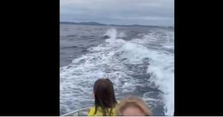 Фото: кадр из видео | «Обалдеть, откуда их столько?»: что сняли на видео в море во Владивостоке