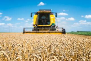 Фото: freepik.com | В Приморье собрали почти шесть тысяч тонн зерна