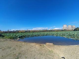 Фото: artemokrug.ru   Популярное озеро очистили от мусора в Приморье