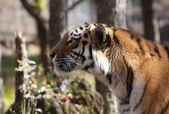Фото: Приморский сафари-парк | Тест PRIMPRESS: узнаете ли вы животных, которые обитают в Приморье
