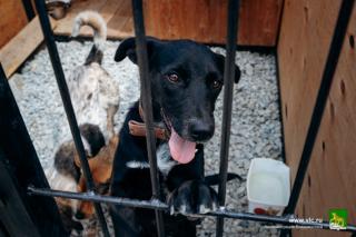 Фото: Евгений Кулешов / vlc.ru   Во Владивостоке займутся отловом, лечением, чипированием и стерилизацией бездомных животных
