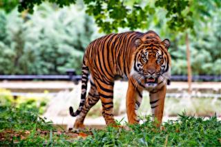 Фото: pexels.com   «Тигрятам от жары»: приморские специалисты соорудили хищникам «джакузи»