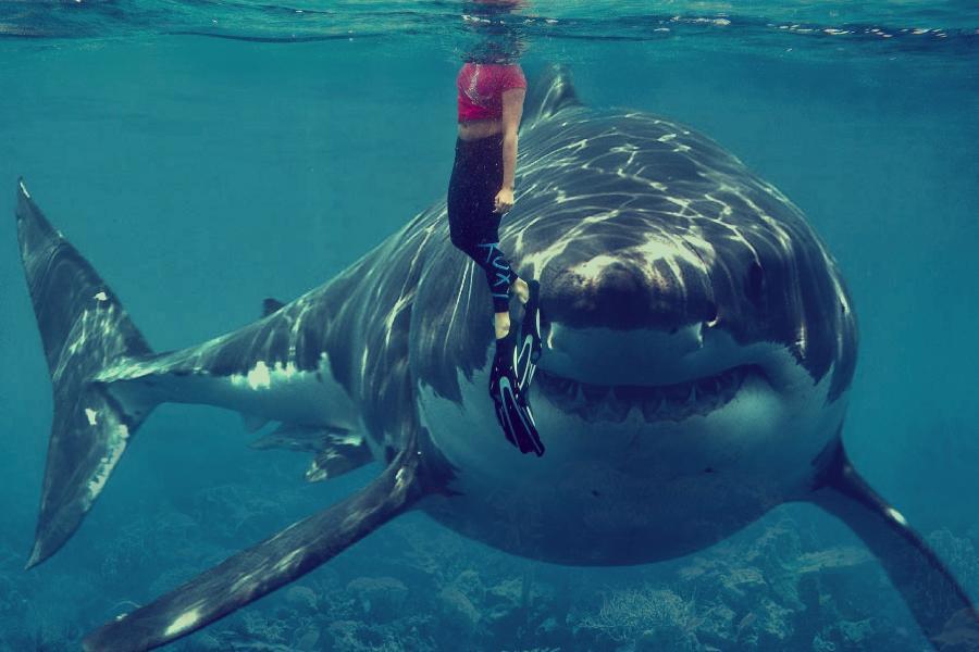 «Почему такая страшная?»: акула пришла к людям недалеко от берега в Приморье
