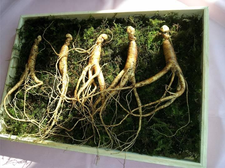 Таможенники изъяли у жителей Китайская республика около 120 корней женьшеня