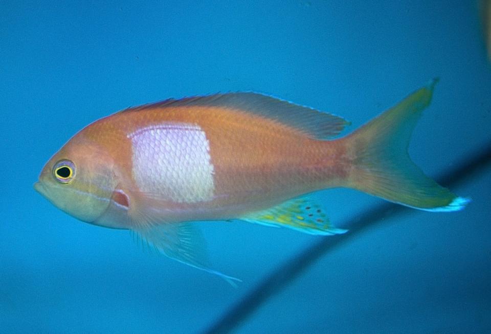 Около 40 тропических рыб поселились в Приморском океанариуме
