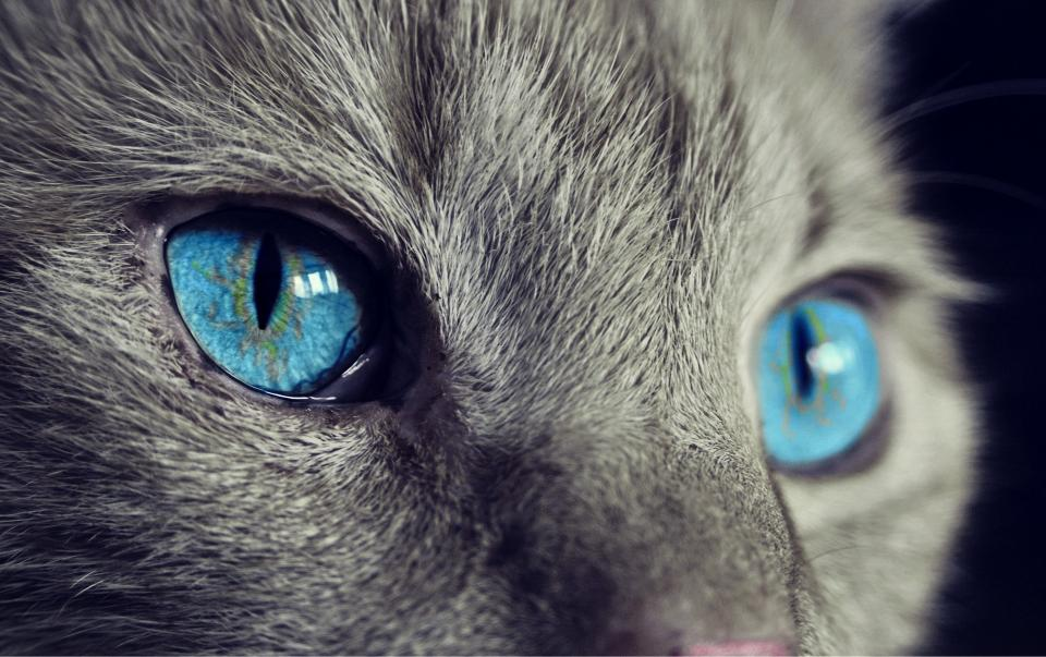 10 причин не заводить кошку