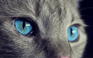 Фото: pixabay.com | 10 причин не заводить кошку