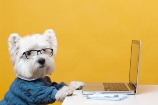 Фото: freepik.com   Как выбрать породу собаки?