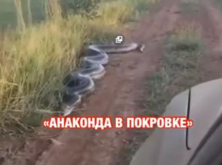 Фото: кадр из видео | Видео с гигантской анакондой в Приморье напугало людей