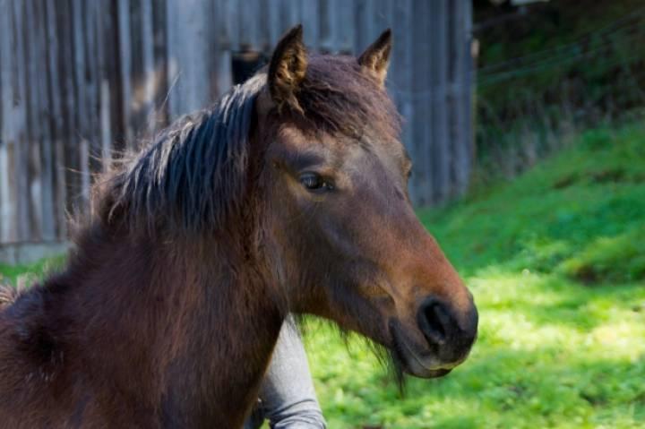 Лошадь напала натрёхлетнего ребенка иоткусила губу