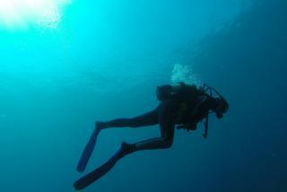 Фото: pixabay.com | Дайвер потерял дар речи от того, что увидел на глубине 20 метров у Владивостока