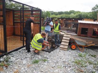 Фото: vlc.ru | Во Владивостокеволонтерскаяорганизация«Друг Рич» приступила к отлову, лечению и стерилизации бездомных собак