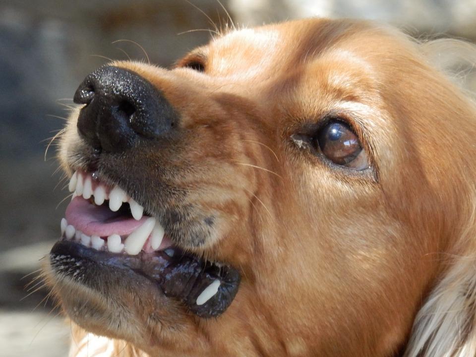 В пригороде Владивостока собака напала на мужчину