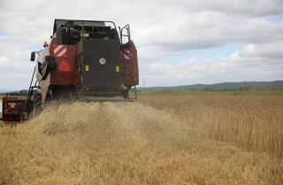 Фото: Игорь Новиков | В Приморье увеличилась урожайность зерновых культур