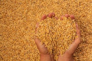 Фото: freepik.com | Как прокормить растущее население Земли? Ученые нашли новое решение