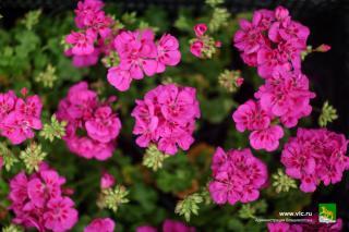 Фото: vlc.ru | Фестиваль цветов пройдет во Владивостоке