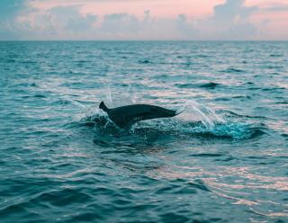 Фото: Pexels   «Совсем близко». Отдыхающие встретились с удивительным гостем на пляже Владивостока