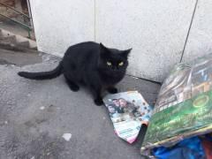 Фото: Елена Личман | На Кирова во Владивостоке неизвестные жестоко убивают бездомных кошек