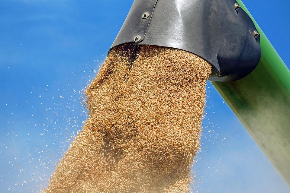Приморские аграрии намололи более девяти тысяч тонн пшеницы
