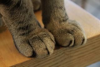 Фото: pixabay.com | Кошки: что делать, если вас поцарапали или укусили?
