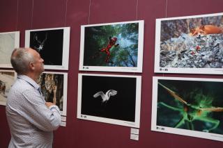 Фото: Екатерина Дымова / PRIMPRESS | Во Владивостоке открылась выставка работ финалистов Дальневосточного фотоконкурса «Глубина резкости»