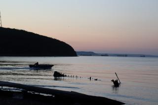 Фото: PRIMPRESS | Опасные хищники внушительных размеров подошли к берегам Приморья