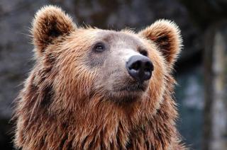 Фото: pixabay.com | Медведь перевернул фотоловушку в приморском нацпарке «Земля леопарда»