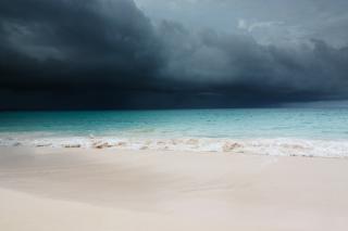 Фото: pixabay.com   «У него девять жизней?»: жуткое видео с пляжа набирает популярность в Приморье