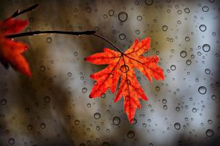 Фото: pixabay.com | Надежды пока нет: синоптики изменили прогноз на сентябрь