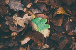 Фото: pixabay.com   Климатолог сказал, что ждет россиян осенью и зимой после аномального лета
