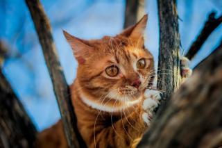 Фото: Шеринберг | Женщина нашла своего кота спустя 11 лет