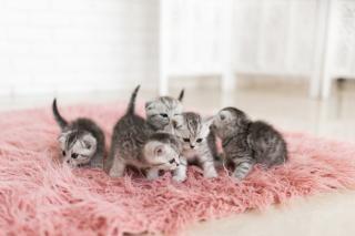Фото: freepik.com   Всех, кто держит дома животных, предупреждают о новых запретах