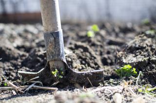 Фото: pixabay.com   Названы даты в сентябре, когда ни в коем случае нельзя выкапывать урожай