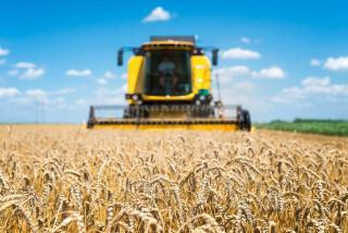 Фото: freepik.com   В Приморье завершился сбор ранних зерновых культур