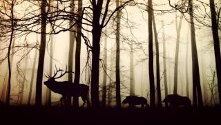 Фото: pixabay.com | Какие животные в России могут оказаться под угрозой вымирания?
