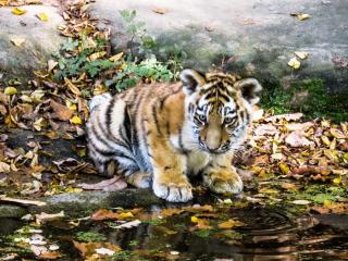 Фото: pixabay.com | На территории приморского парка подружились два котика