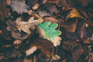 Фото: pixabay.com   «Сейчас туда все рванут»: приморцы восхищаются сделанной в лесу фотографией