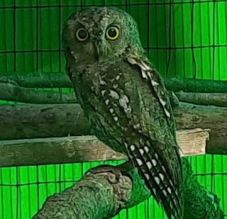 Фото: скриншот siberiantiger_center | «Была потеря ориентации»: в Приморье спасают редкую птицу