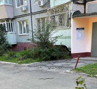 Фото: скриншот artem.news.plus | «Будьте осторожны»: приморцев предупредили о змее, поселившейся во дворе жилого дома