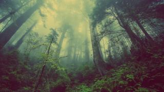 Фото: pixabay.com   Приморцев предупреждают об опасности в лесу