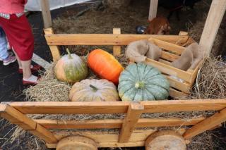 Фото: PRIMPRESS / Софья Федотова | Дегустация и свежая продукция: во Владивостоке развернулась ярмарка «Приморские продукты питания»