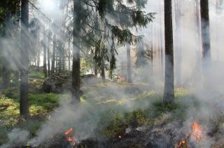 Фото: pixabay.com   Россиян предупредили о масштабных пожарах на территории шести федеральных округов